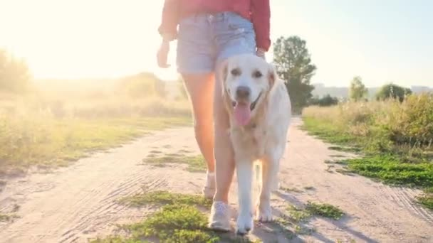 Golden retriever walking with girl