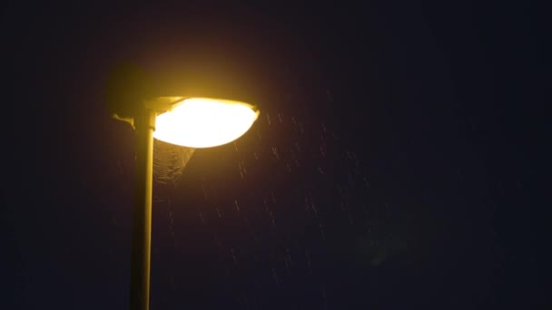 Rainy night. Solitary Lamppost