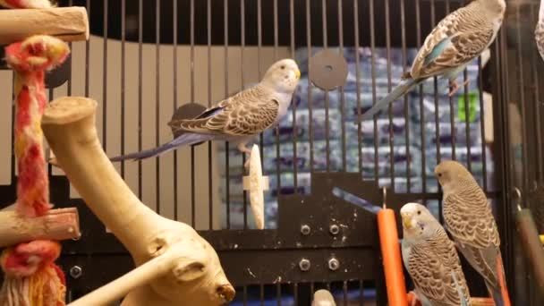 Motion Fancy Parakeet Cage Petsmart Store Stock Video Payphoto