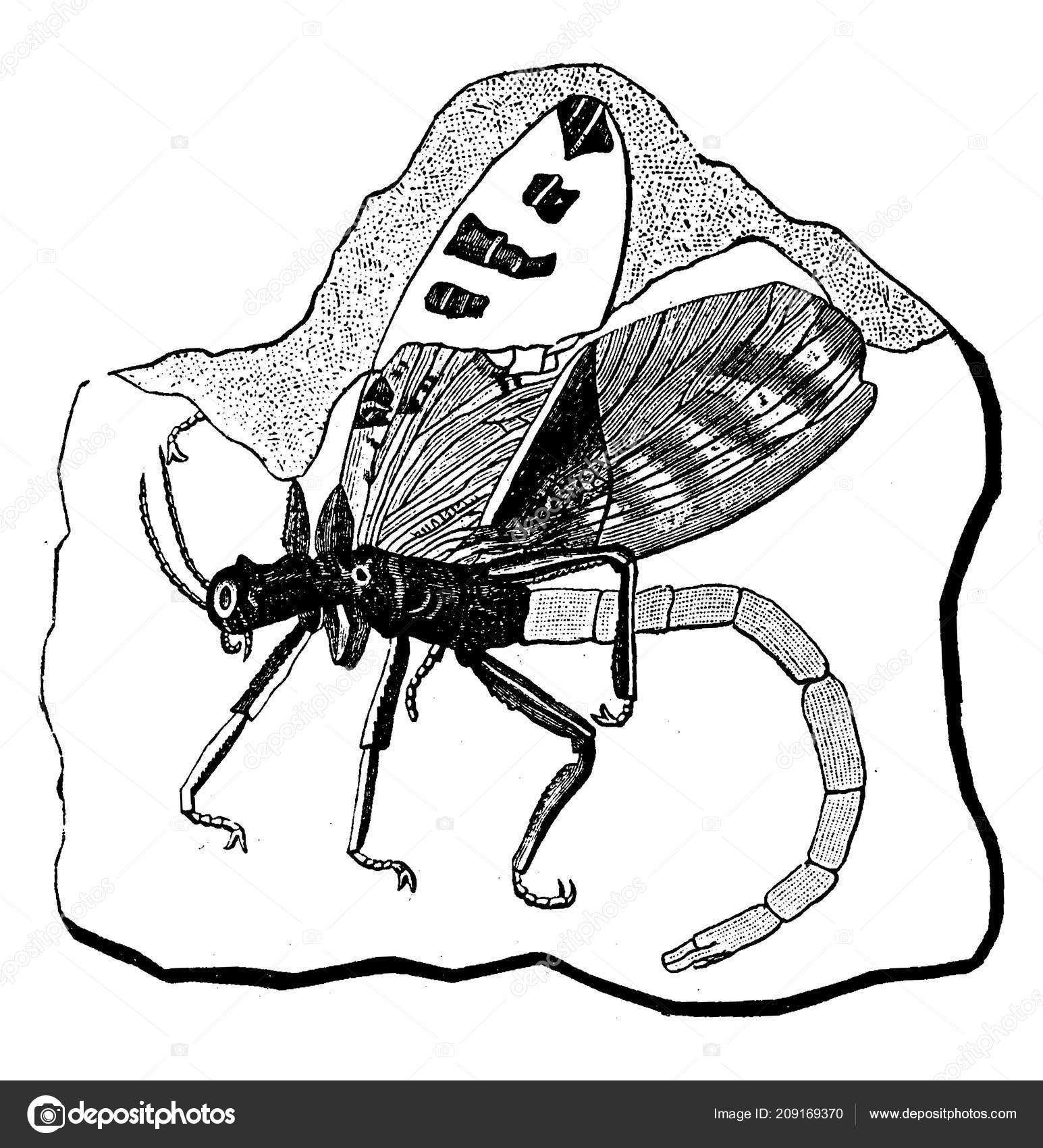Vrstevní sled uzavírají tzv. březinské břidlice, které náleží podle trilobitové fauny prokazatelně již spodnímu karbonu.
