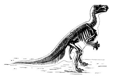 The main skeleton of Iguanodon, vintage engraved illustration. Earth before man