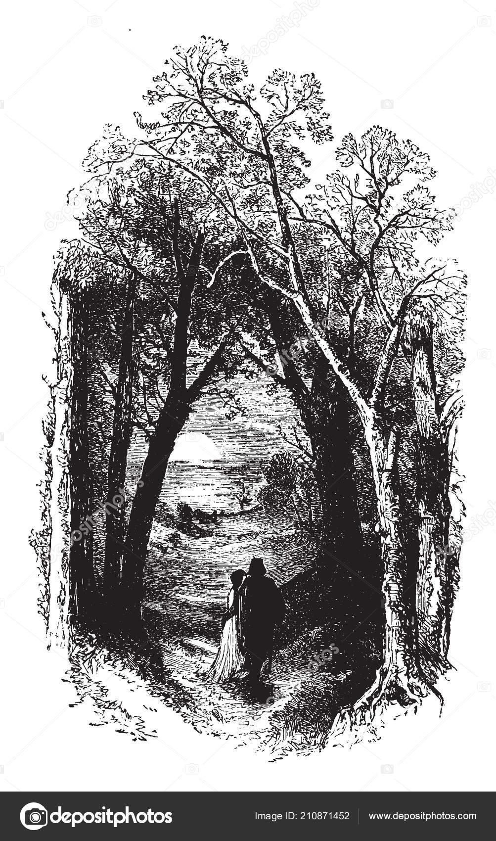 Dark Walkway Couple Walking Dark Tree Lined Walkway Vintage Line Vector Image By C Morphart Vector Stock 210871452