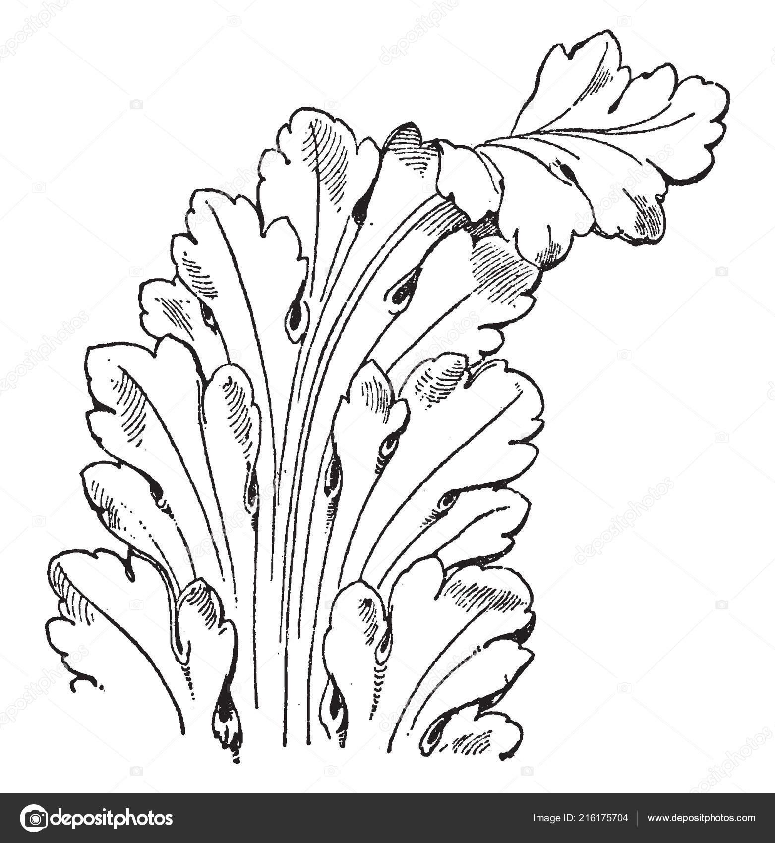 French Leaf Renaissance Long Leaves Pattern Vintage Line Drawing Engraving Stock Vector C Morphart 216175704