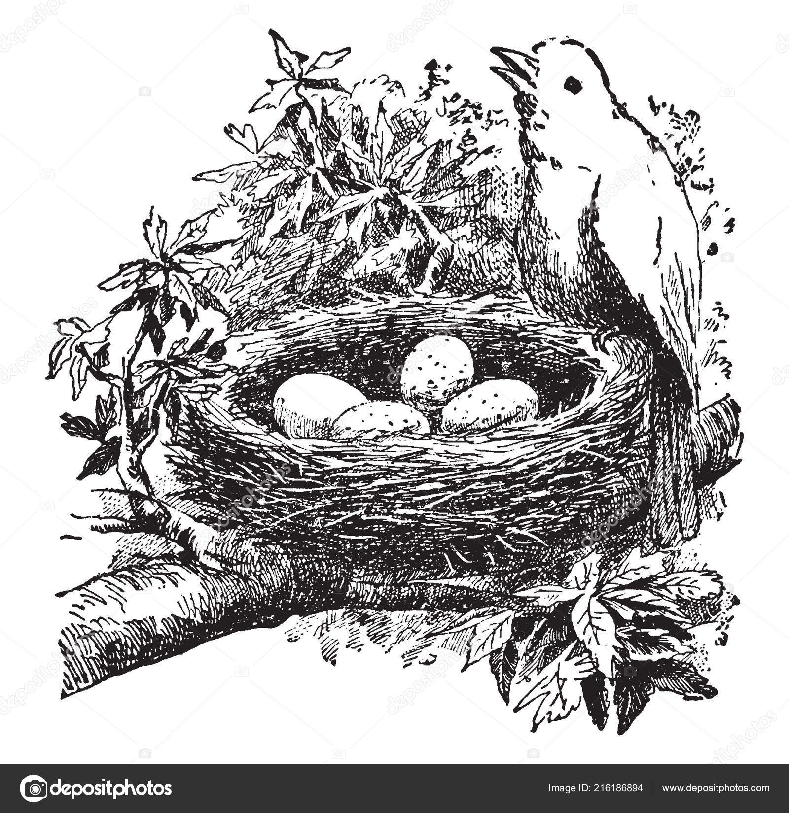 Antique Bird Nest Illustration - The Graphics Fairy