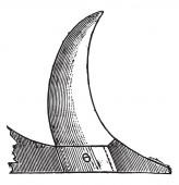 Coulter člen má konkávní okraj, vintage gravírovanou. Průmyslové encyklopedii E.-O. Lami - 1875