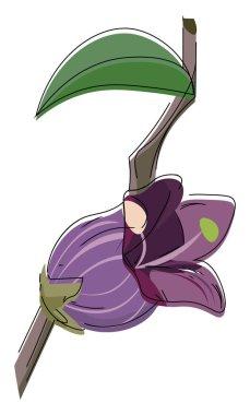 Image of belladonna flower, vector or color illustration.