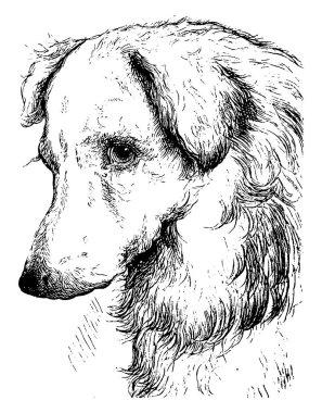 """Картина, постер, плакат, фотообои """"собаки используются в качестве домашних животных и считаются верными своему хозяину, а также другом шафера. здесь показана голова собаки, рисунок винтажной линии или гравировка. модульные"""", артикул 395699922"""