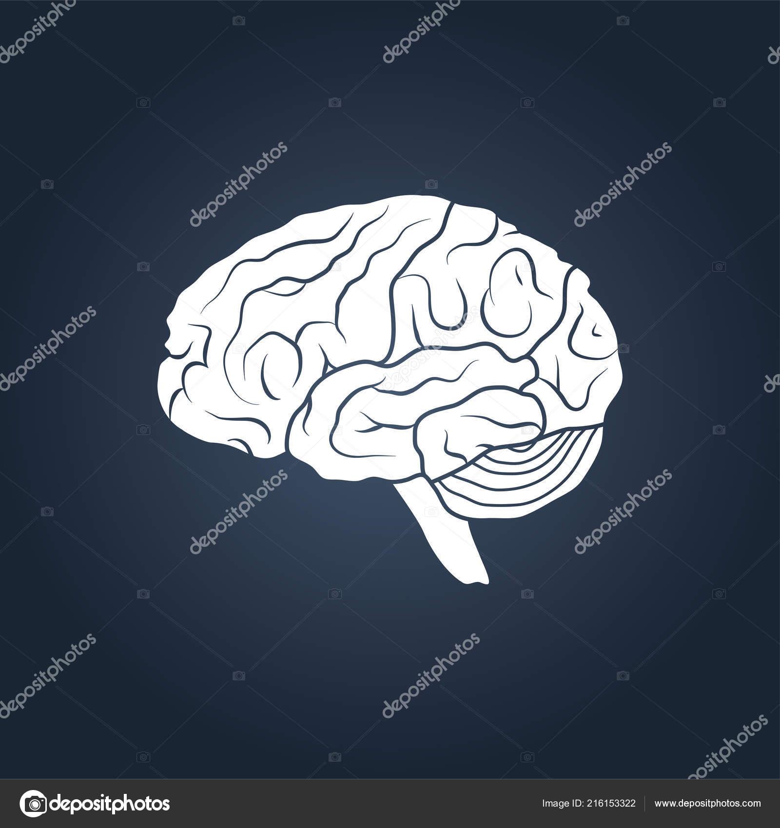 Profile View Human Brain Simple Vector Illustration — Stock