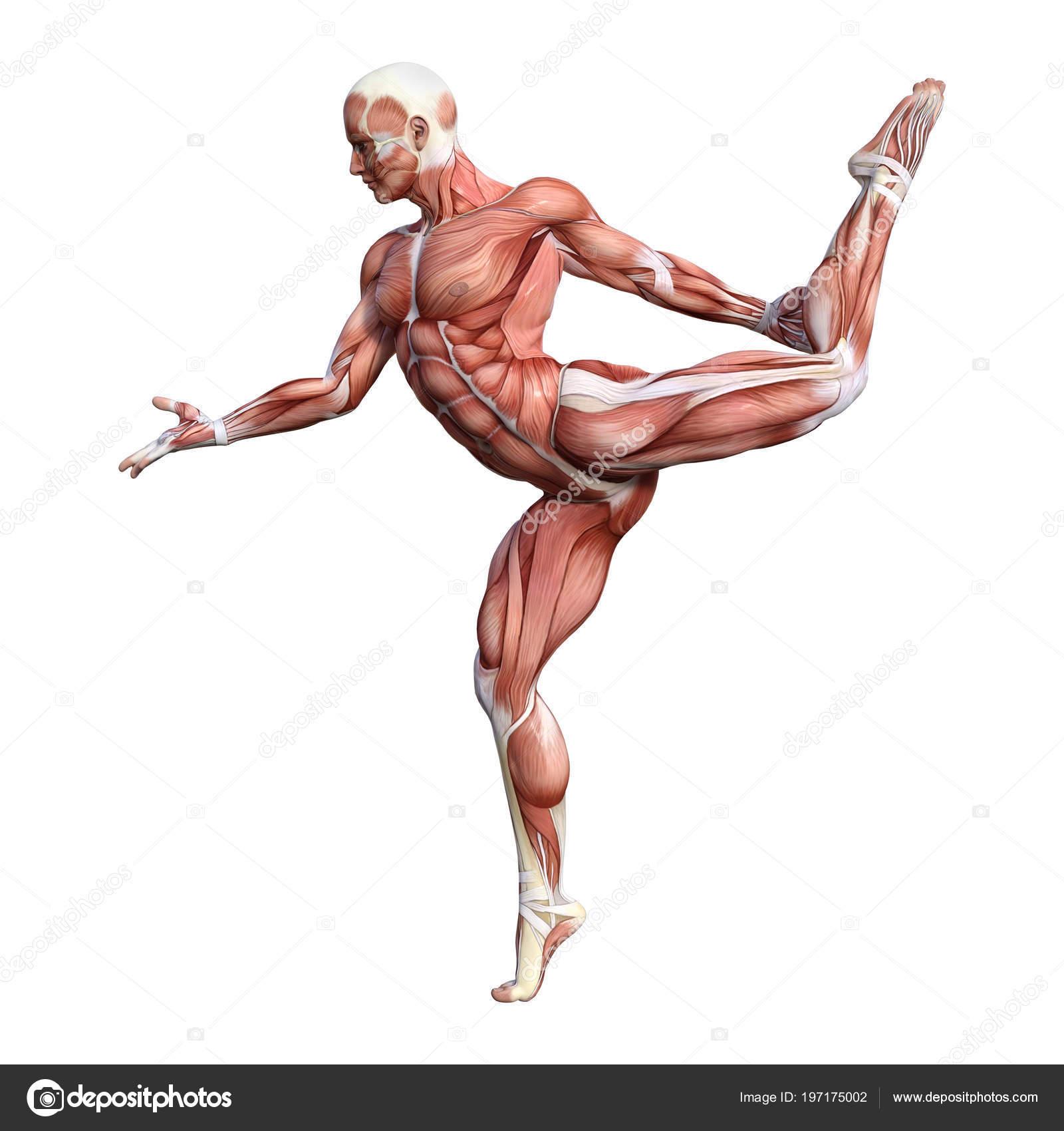 Mapa Render Una Figura Anatomía Masculina Con Músculos Aislados ...
