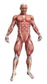 3D-Rendering einer männlichen Anatomie-Figur mit Muskeln Karte isolierten auf weißen Hintergrund