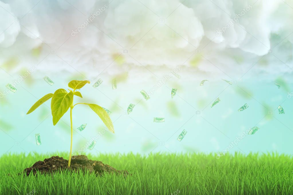 3d rendering of a young sprout growing on a fresh green lawn and a dollar bills rain falling down from the cloudy sky.