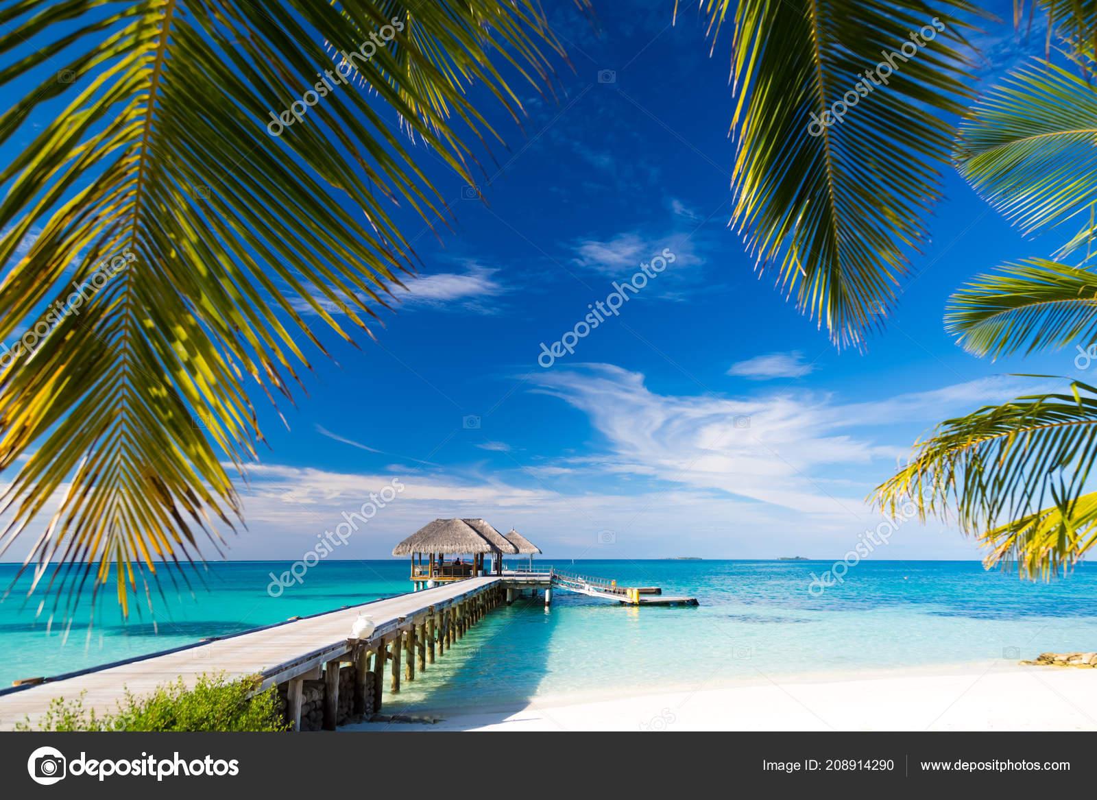Tranquil Beach Scene Exotic Tropical Beach Landscape