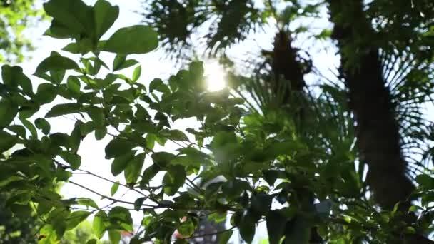 wunderbare Sonnenstrahlen im romantischen Garten