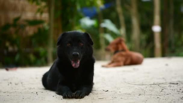 Černý domestikovaný pes leží na zemi uprostřed džungle a odpočinek.