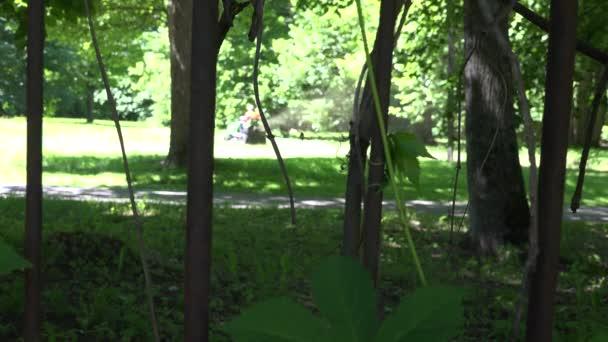Zahradní minitraktor stříhání a rostoucí trávy ve vzduchu. 4k
