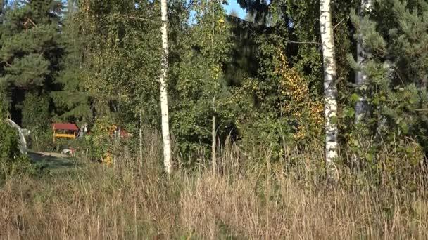 Albero di betulla di autunno rami con foglie e tronco di colore. Inclinare il colpo. 4k