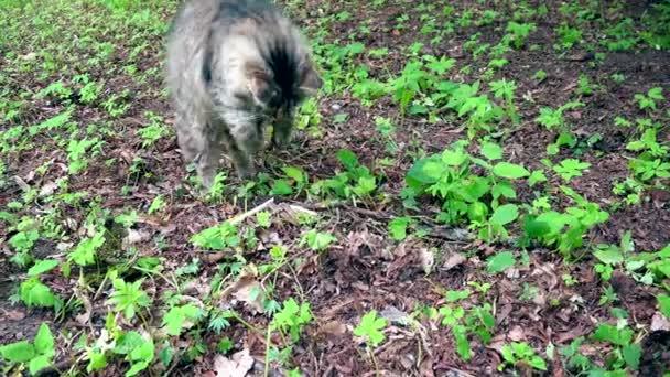 niedliche Katze versucht, etwas zwischen alten Blättern und Schmutz zu fangen