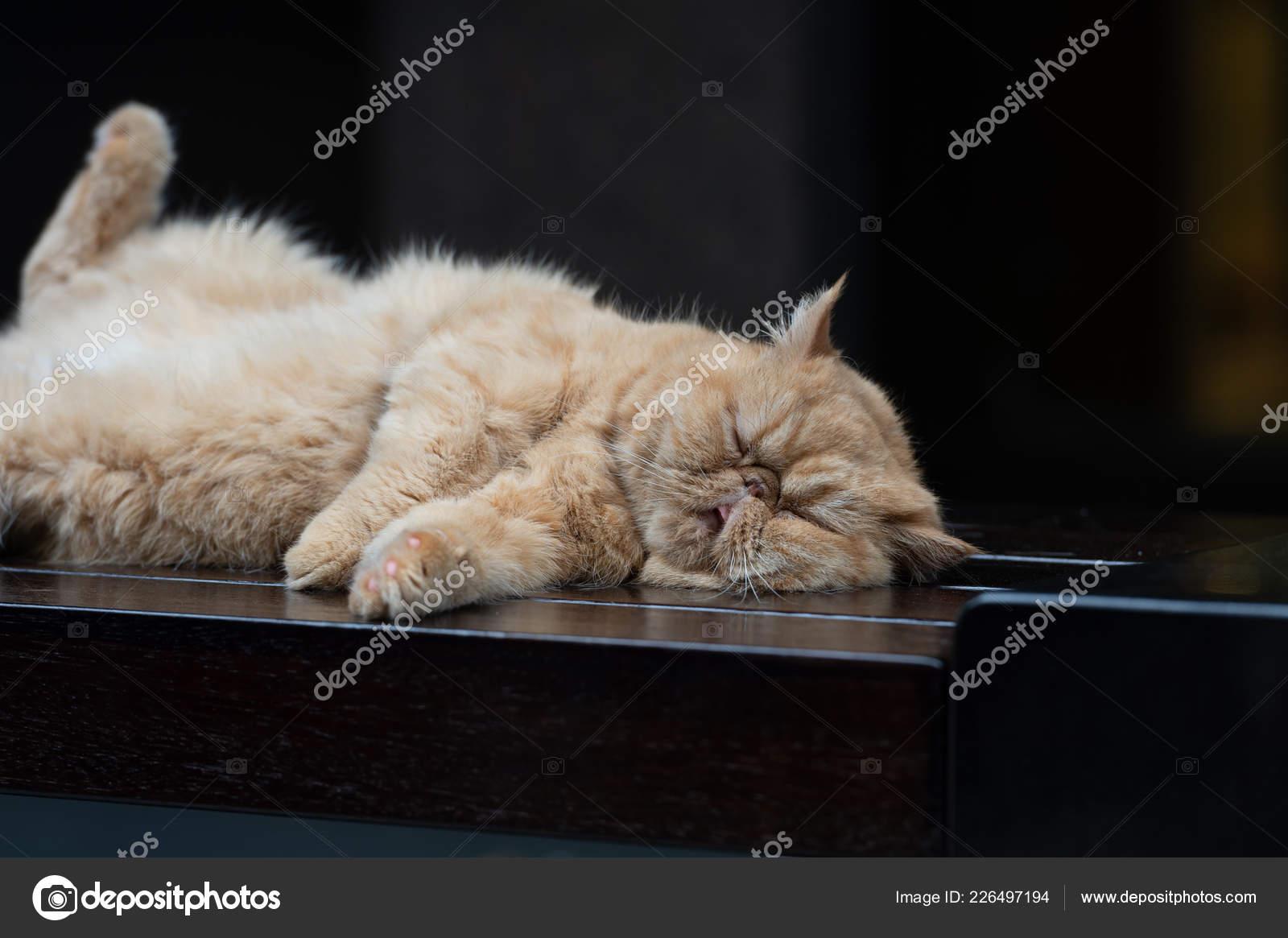 Kitten Resting Bizarre Posture Stock Photo C Robbin0919 Gmail Com 226497194