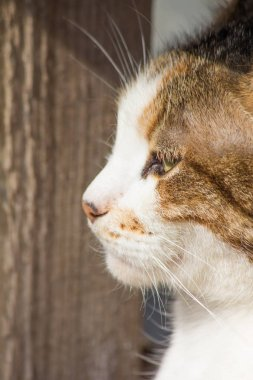 portrait of a brown street cat