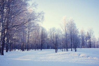 Winter park landscape. Beautiful landscape. Nature
