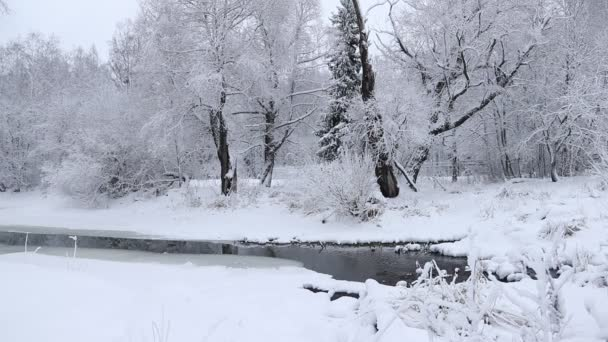 Zimní krajina, příroda v sníh, padající sníh video