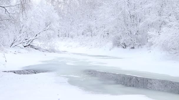 Zimní krajina se zasněženými stromy a řekou ve dne