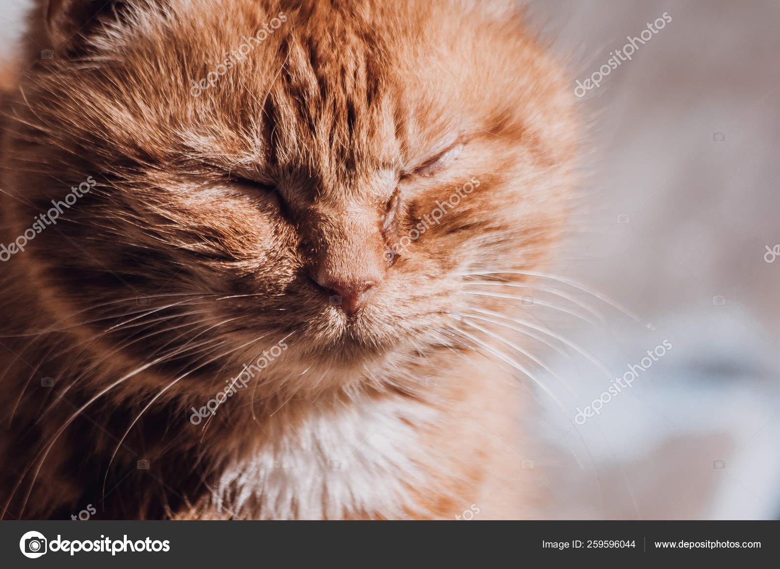 18 763 Sad Cat Stock Photos Images Download Sad Cat Pictures On Depositphotos
