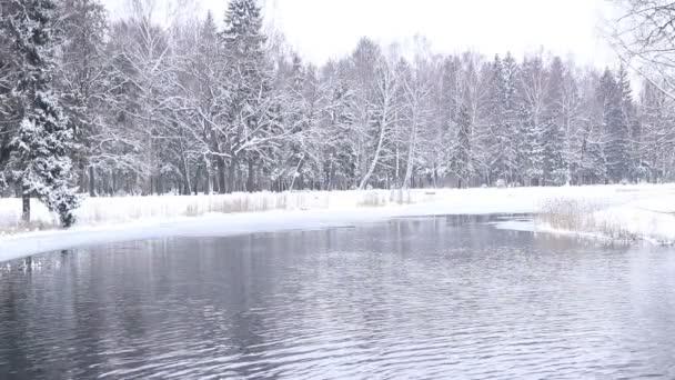Zimní krajina zasněženého parku a jezera