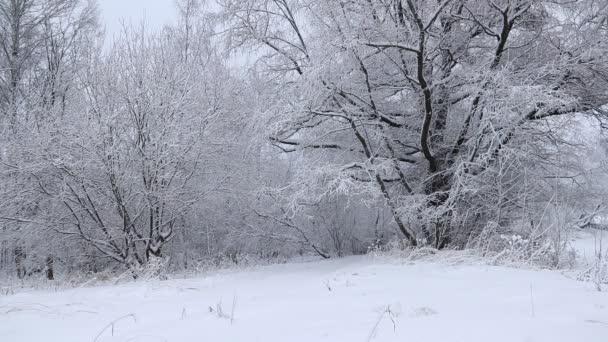 Nádherná krajina v zimním lese. Stromy pokryté sněhem