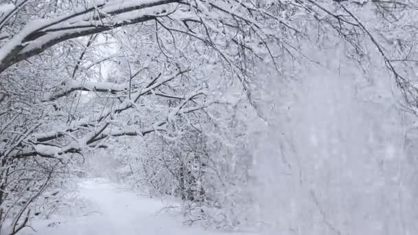 Kilátás a téli útról. Havas fák az út mentén. Téli utazás