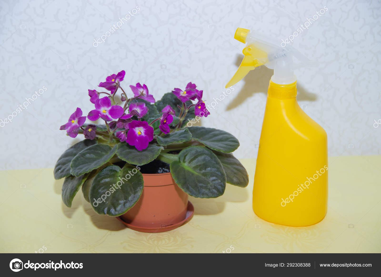 Homemade Flower Violet And Sprayer For Flowers Purple Flower