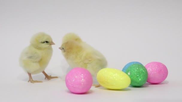 Malá žlutá kuřátka a velikonoční vajíčka na bílém pozadí. Ptáčci. Chlupatý holky. Kuře v dětství.