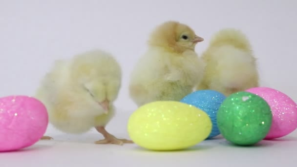 Little yellow chickens and easter eggs on a white background. Little birds. Fluffy chicks. Chicken in childhood.