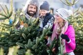 Rodinný nákup vánoční strom na trhu