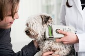 Vet specialist examining sick dog in clinic