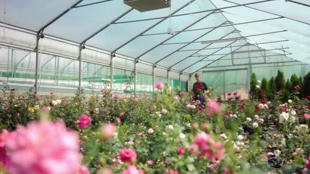 Greenhouse with roses in small business gardening
