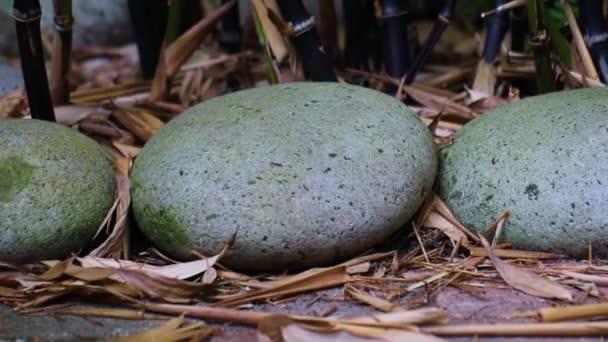 Šedé kameny a tradiční kámen vytesané Jizo zblízka s bambusem na pozadí