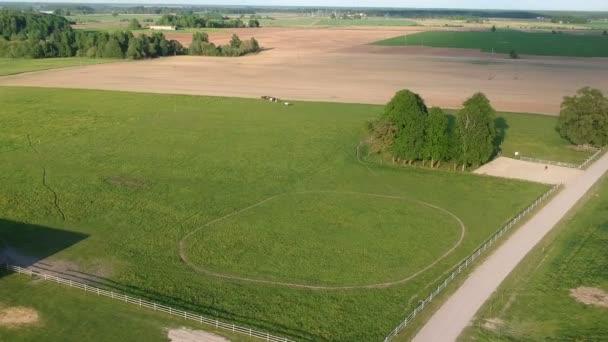 DRONY letět nad louka a pole s koňmi skupinou, letecký pohled na jaře