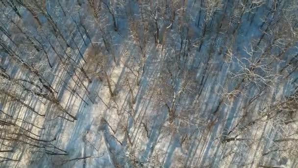 Frostigen schneereichen Winter wilden Wald, Luftbild