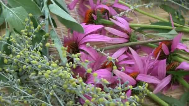 Rotující čerstvé lékařské byliny na pozadí. Echinacea, červové dřevo a šalvěj na bambusové rohoži