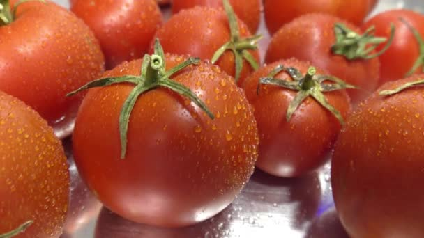 Čerstvá rajčata. Čerstvá rajčata s kapkami rosy. Cherry rajčata s bazalkou na ocelovém pohyblivém stole zblízka.