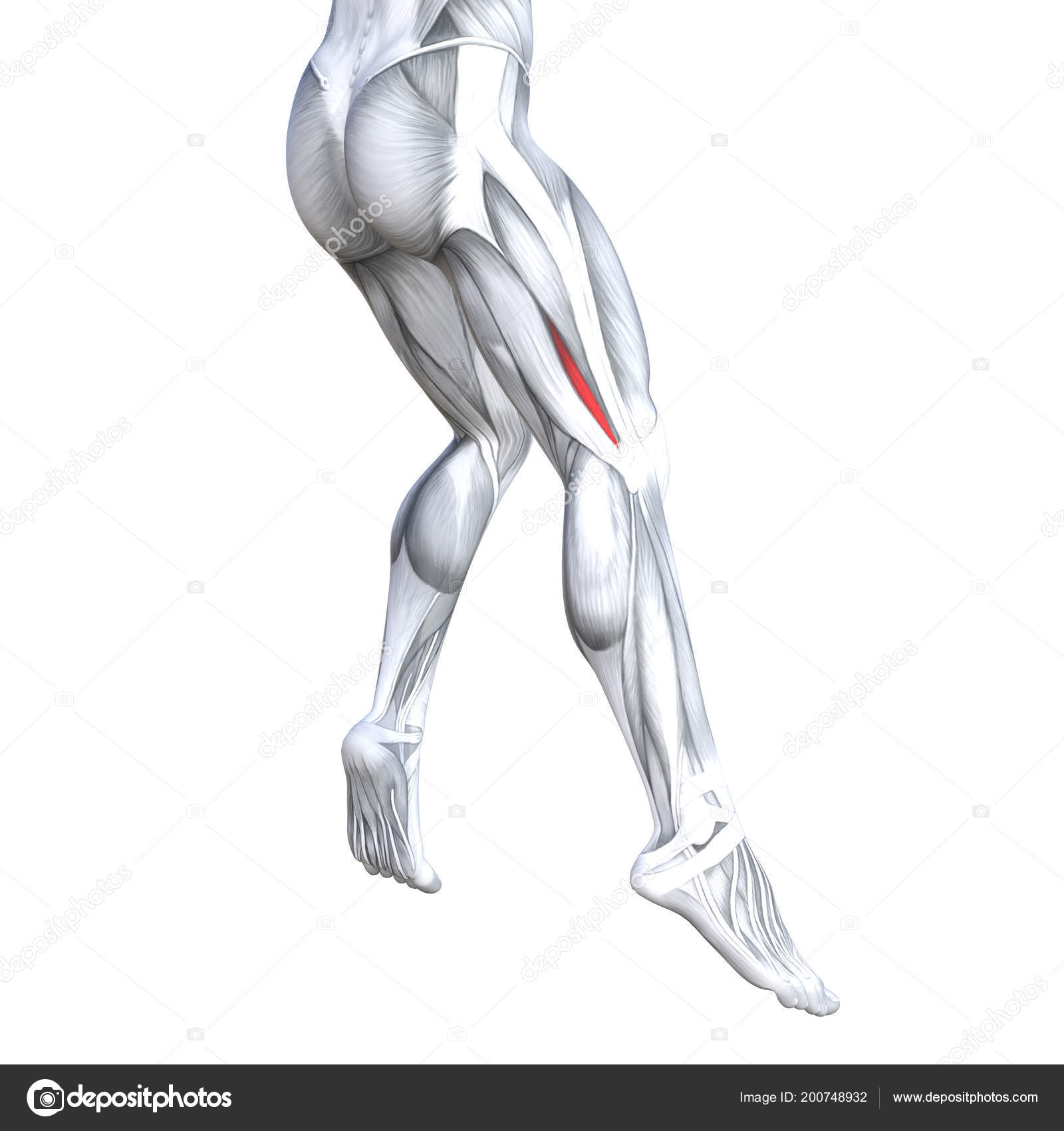 Concept Conceptual Illustration Fit Strong Back Upper Legs Human