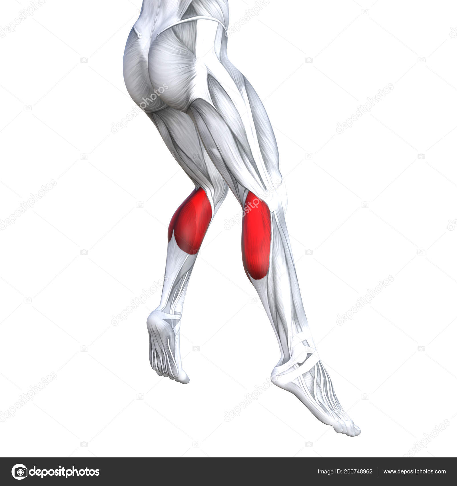 Concept Conceptual Illustration Fit Strong Back Lower Legs Human