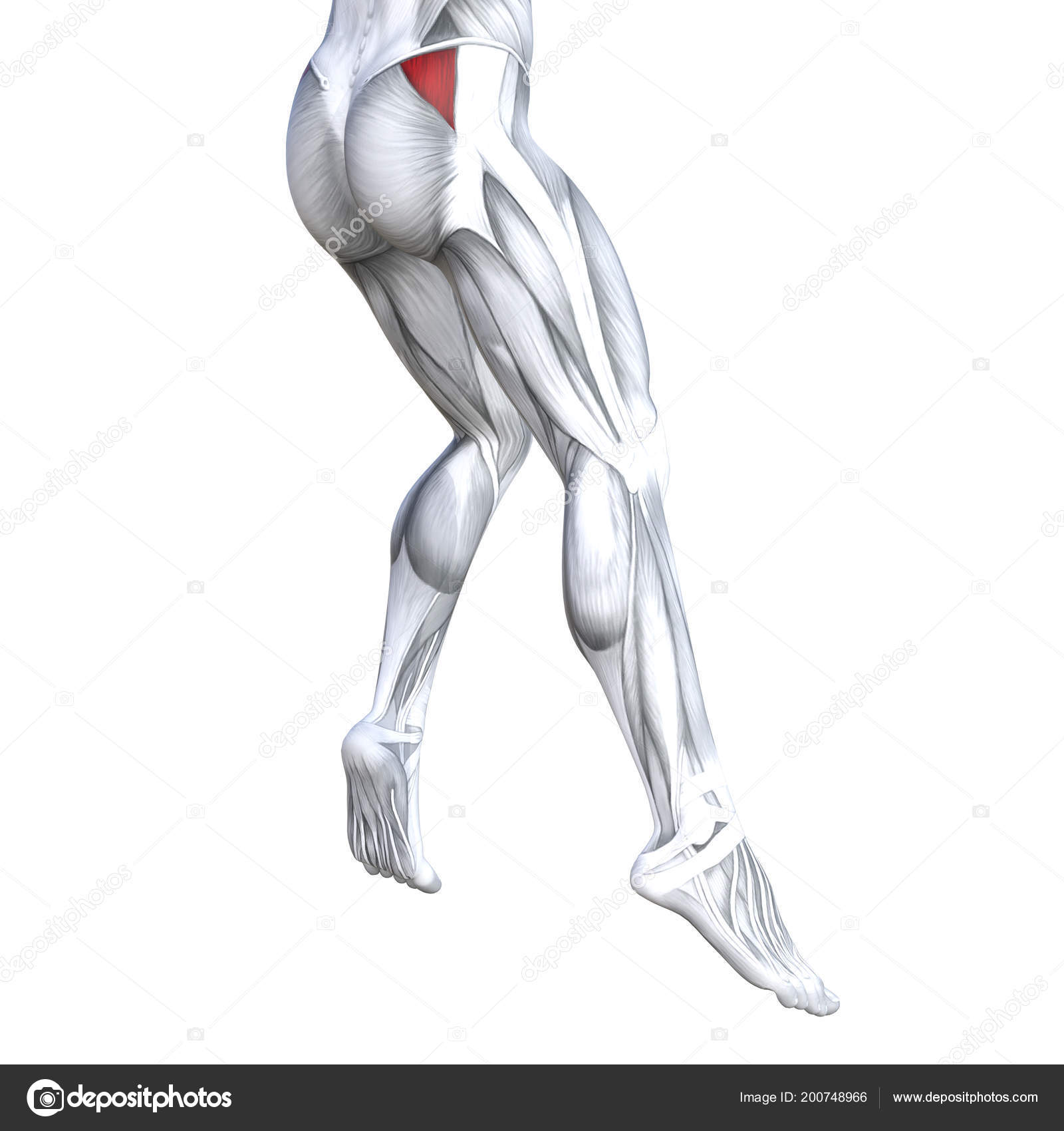 Concept Conceptual Illustration Fit Strong Back Upper Legs Human ...
