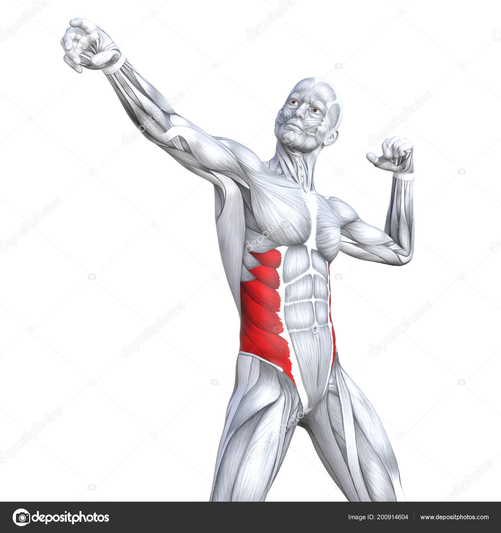 Konzept Konzeptionell Abbildung Brust Passen Starken Menschlichen ...