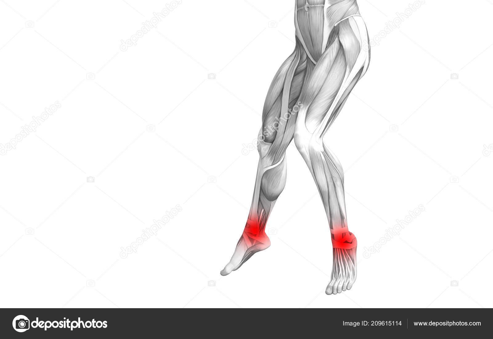 Болезни сустава ног скачать резаная рана локтевого сустава первичная обработка раны наложи повязку