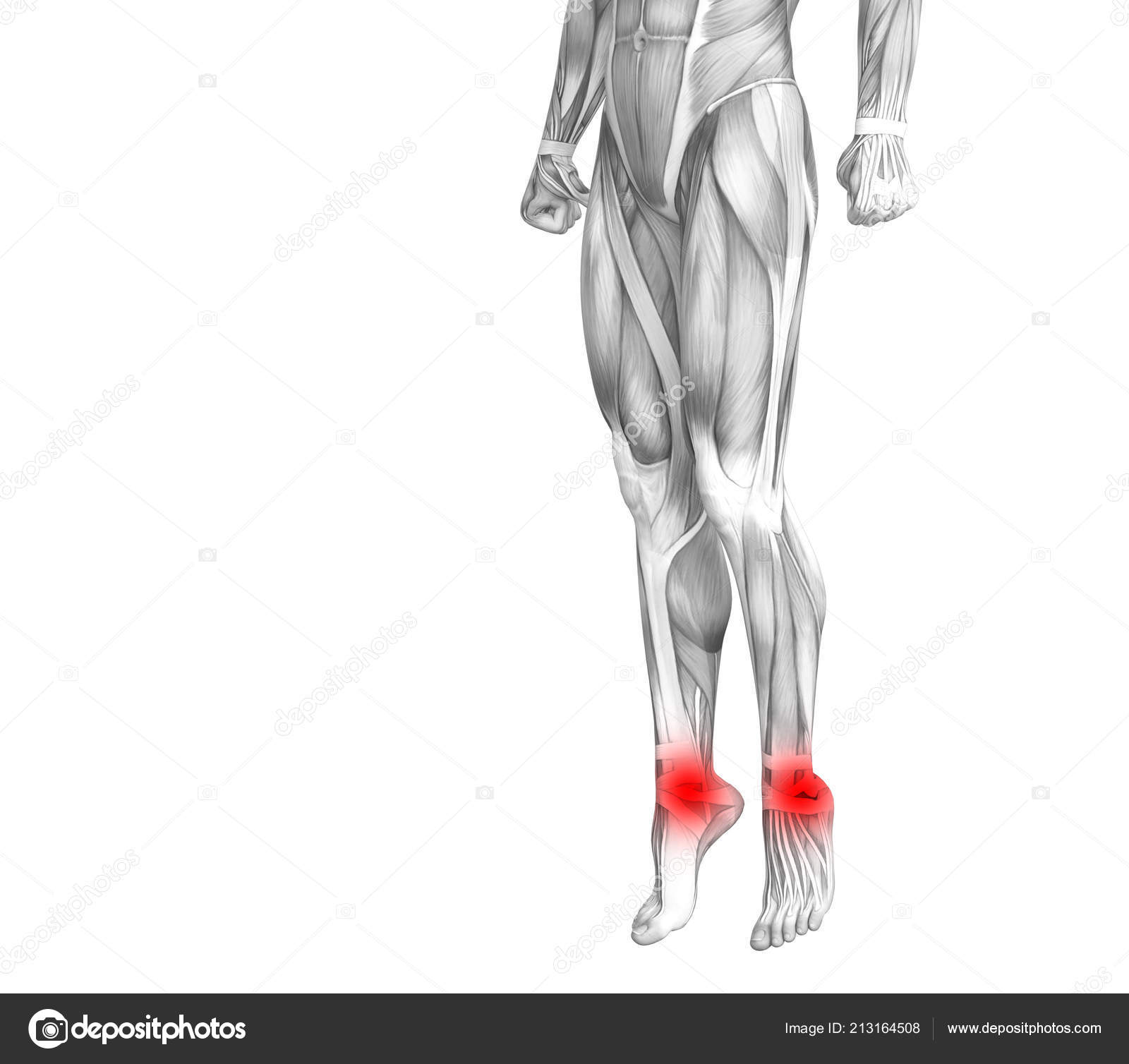 Conceptual Ankle Human Anatomy Red Hot Spot Inflammation Articular ...