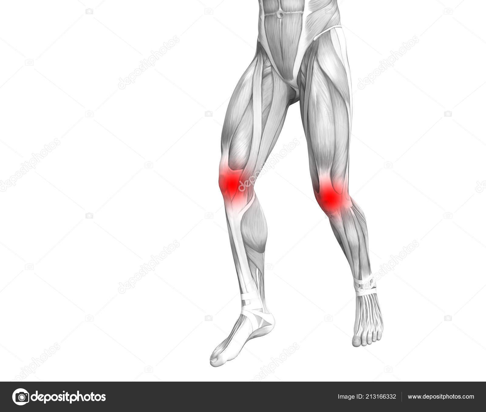 Anatomie Humaine Genou Conceptuel Avec Inflammation Rouge ...