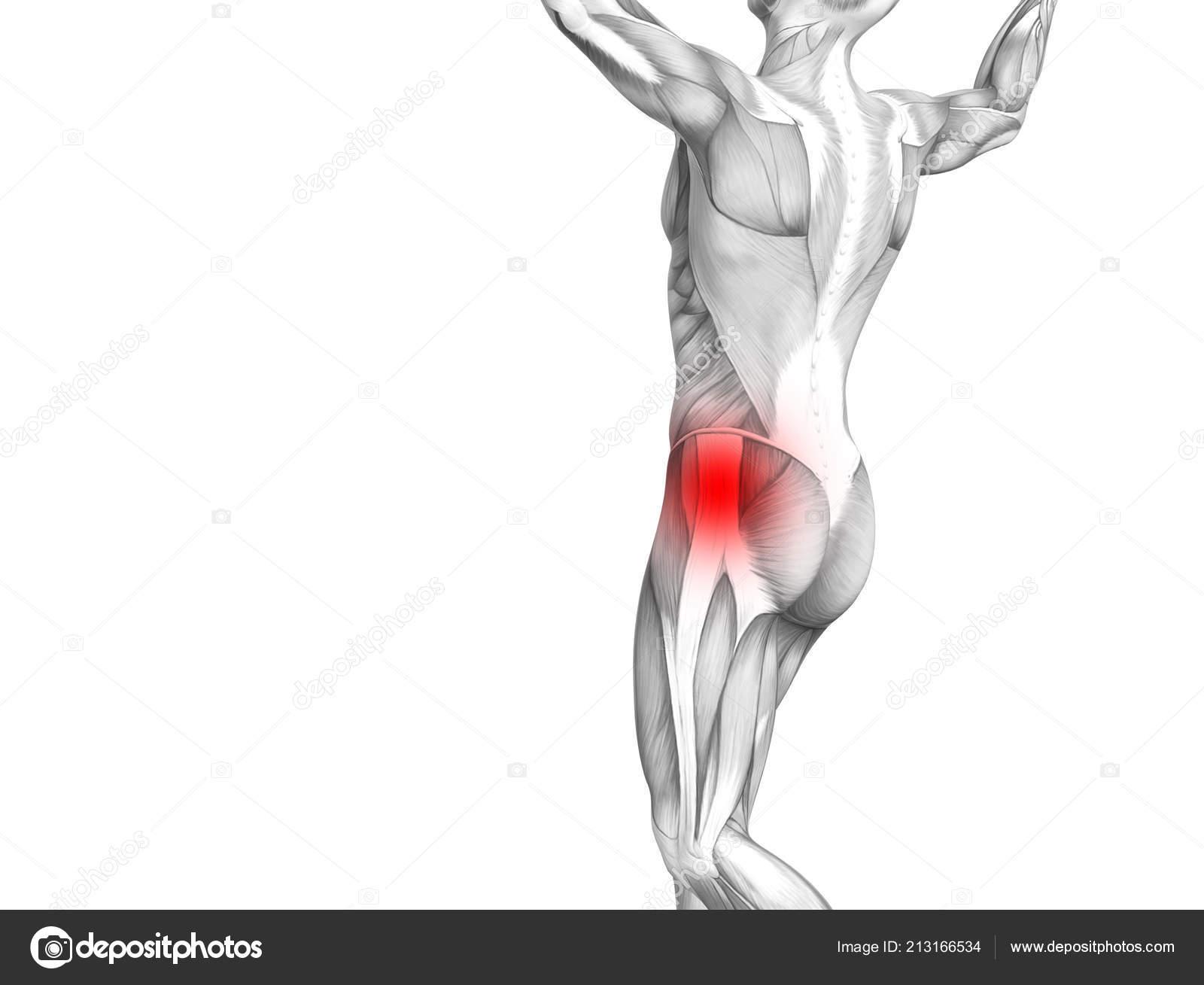 Conceptual Hip Human Anatomy Red Hot Spot Inflammation Articular