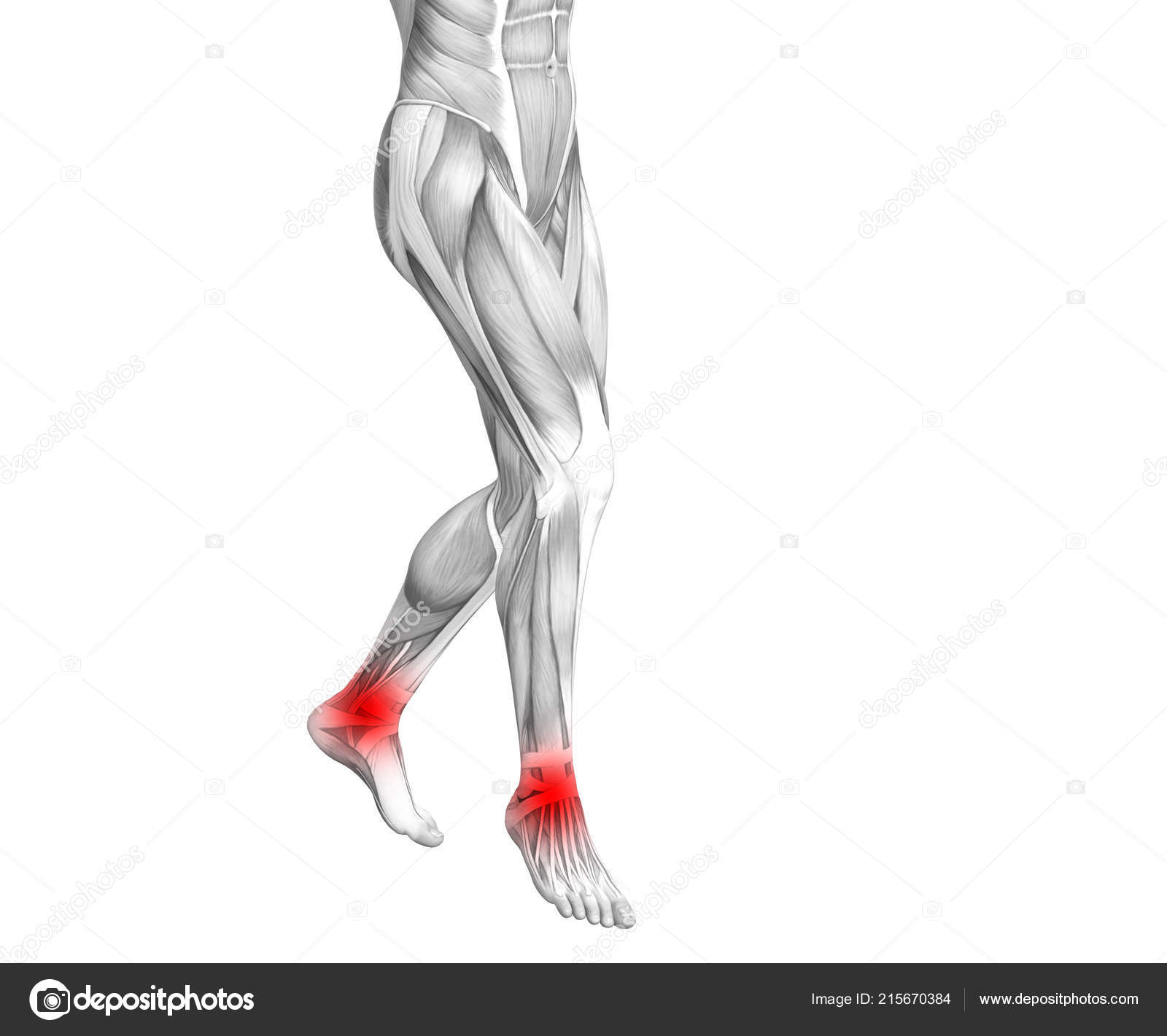Conceptual Ankle Human Anatomy Red Hot Spot Inflammation Articular